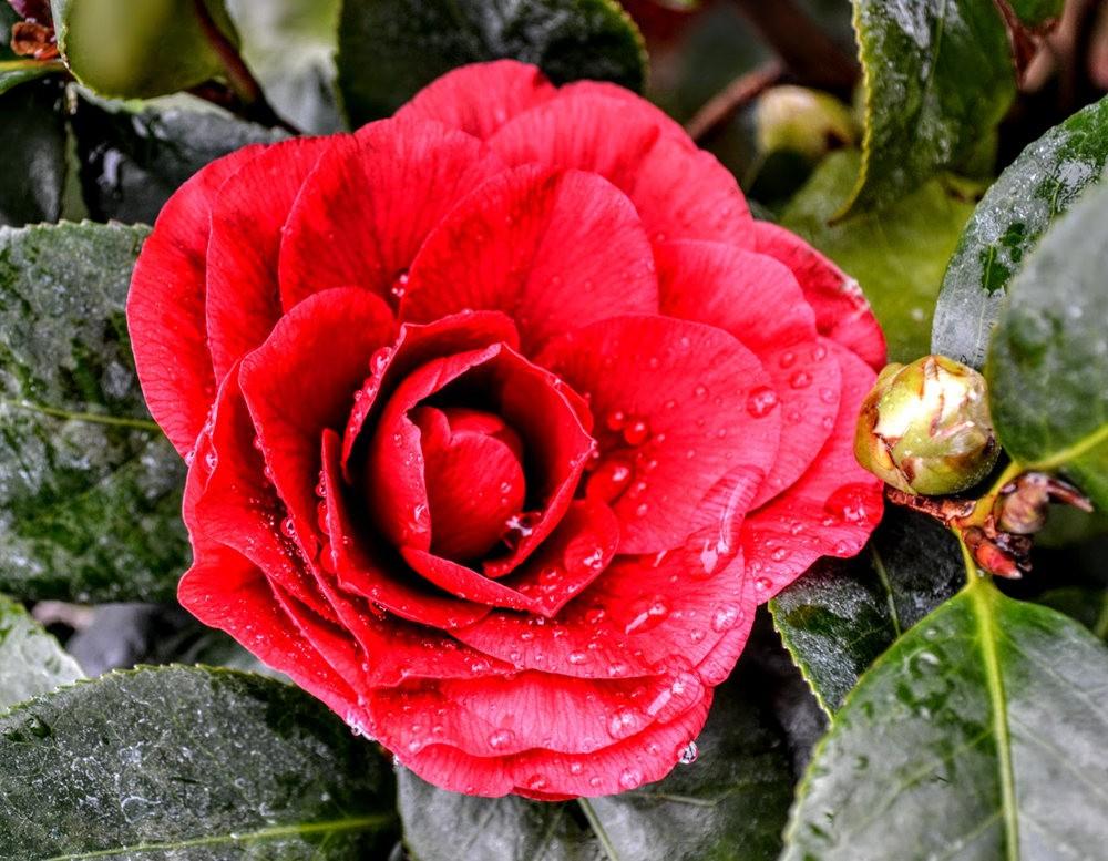 花卉日记之---6_图1-16