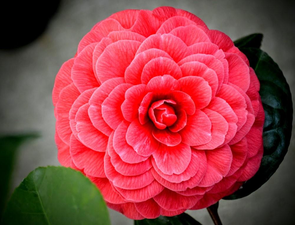 花卉日记之---6_图1-18