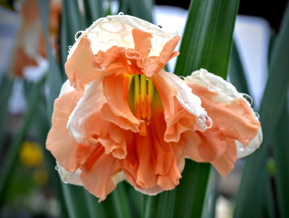 花卉日记之---6_图1-19