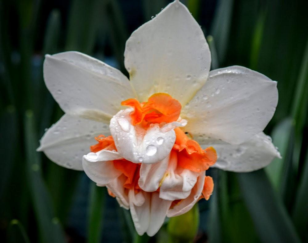 花卉日记之---6_图1-20