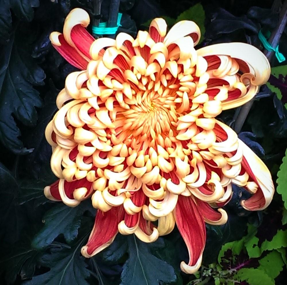 花卉日记之---6_图1-22