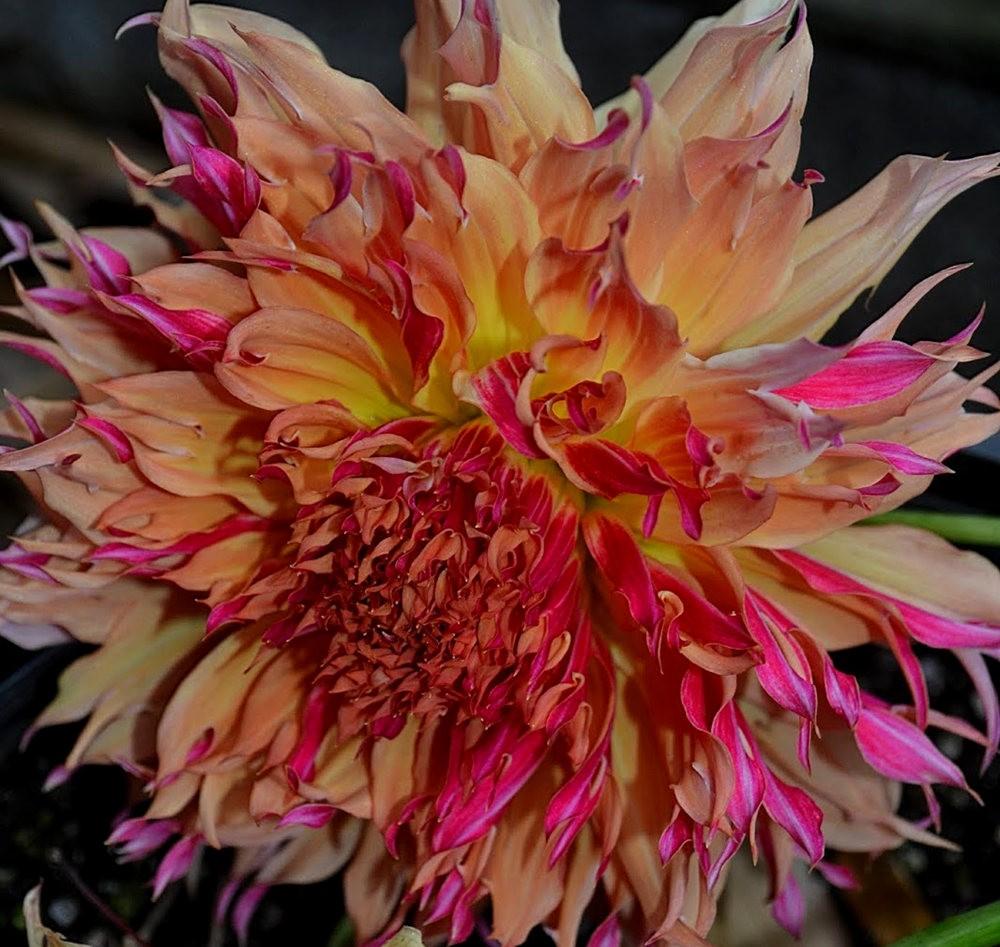 花卉日记之---6_图1-23