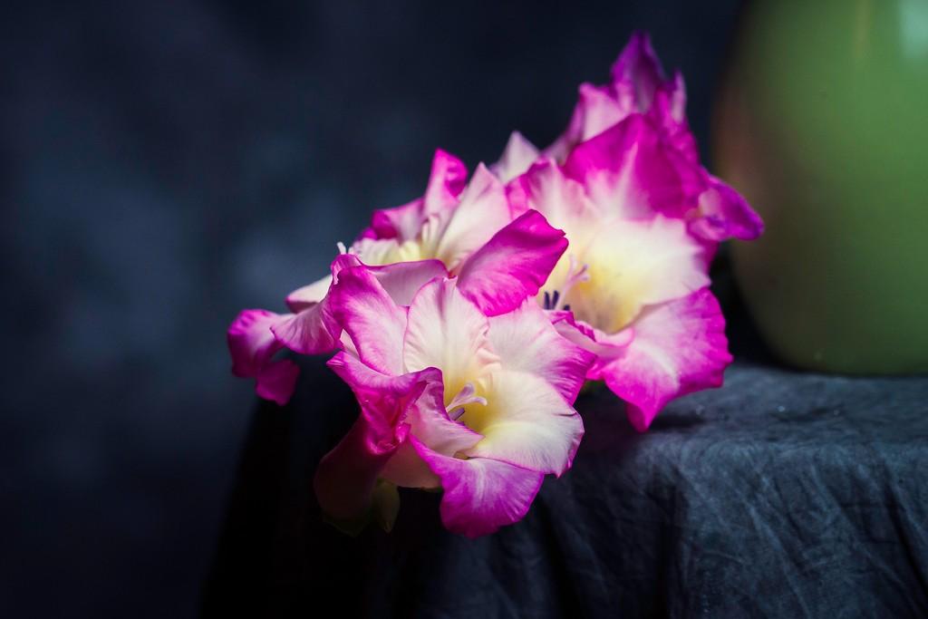 菖兰花,幽静素雅_图1-10