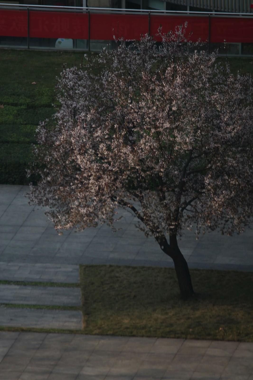 北窗外那棵树,那棵树,还是那棵树……_图1-2