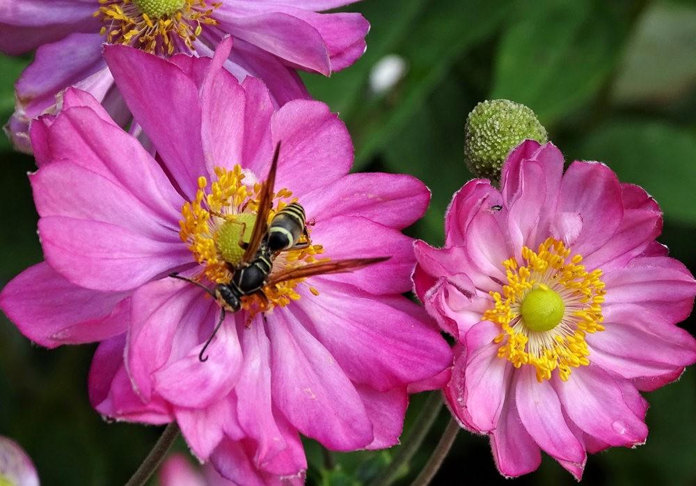 花卉日记之----7_图1-1