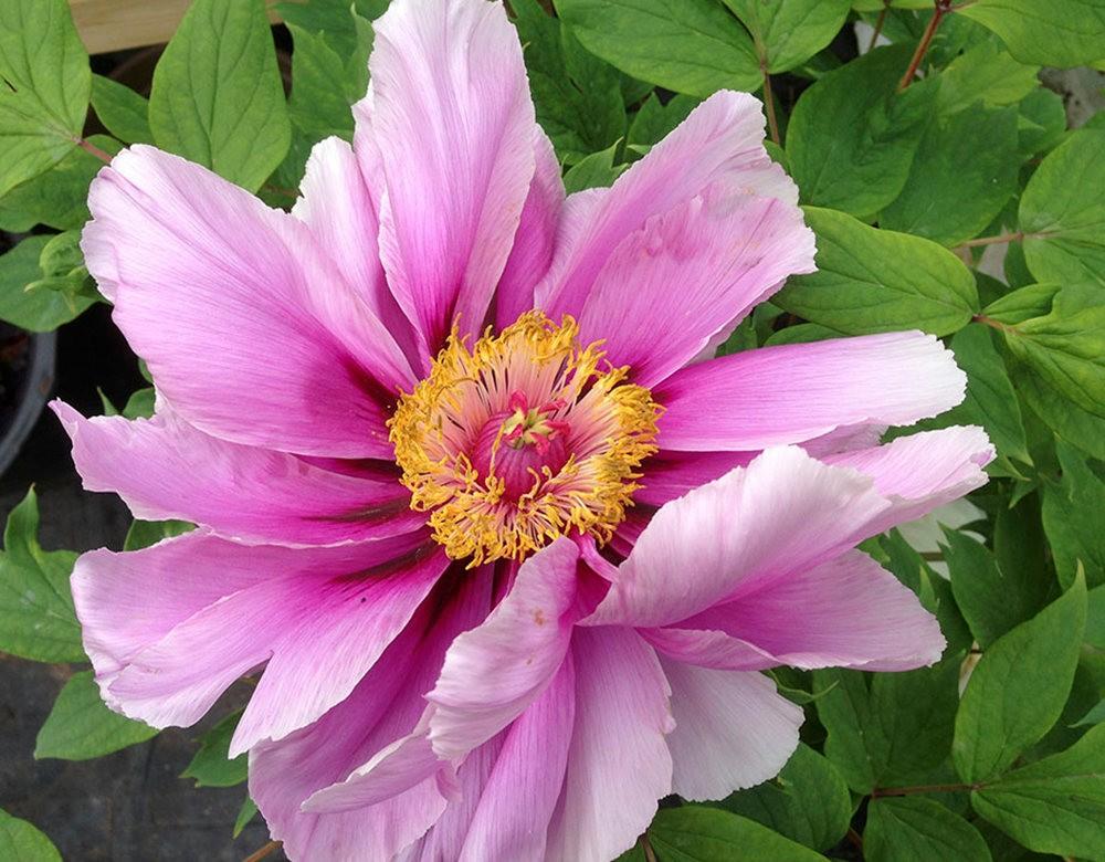 花卉日记之----7_图1-5