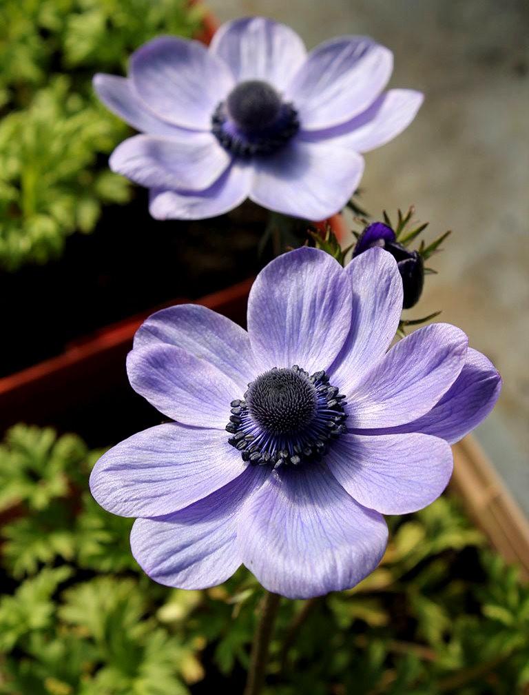 花卉日记之----7_图1-6
