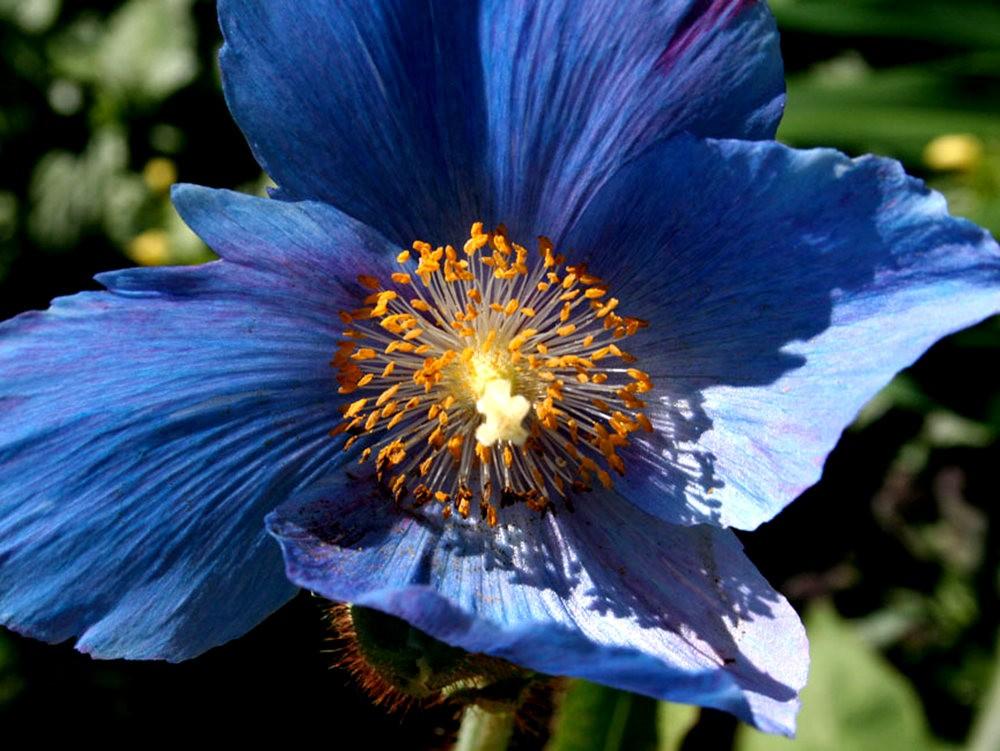花卉日记之----7_图1-9