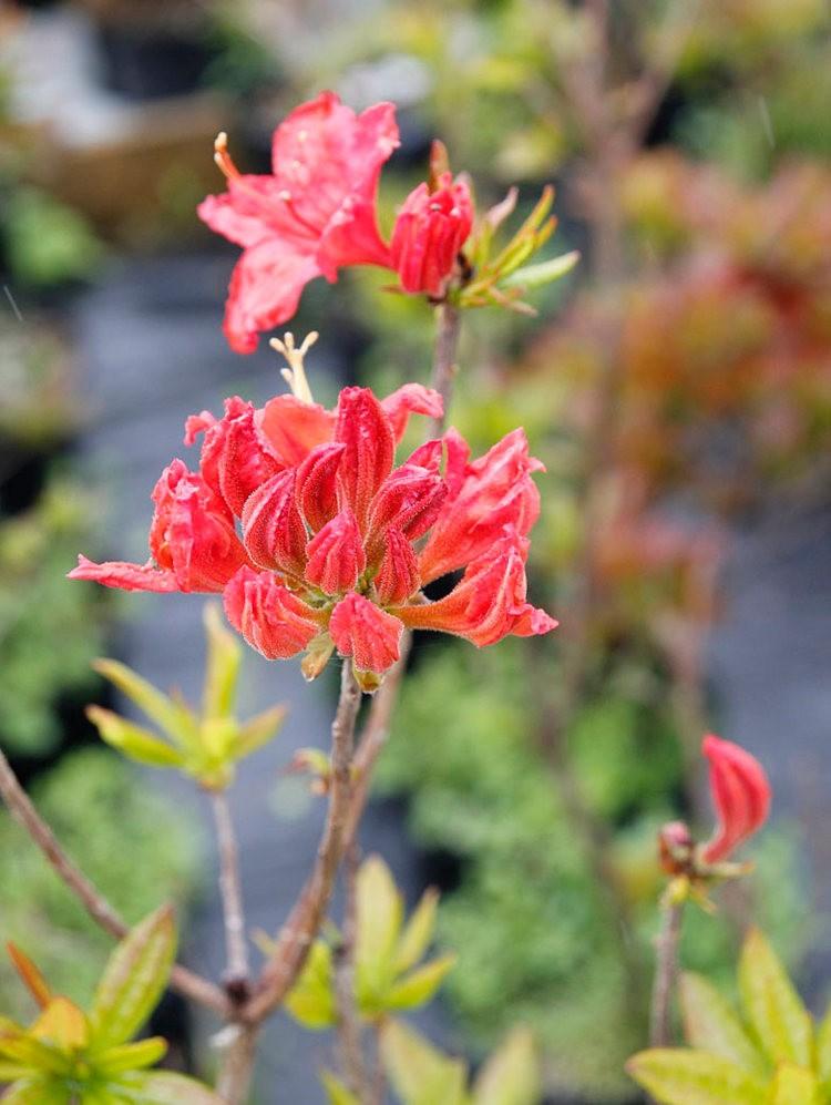花卉日记之----7_图1-11