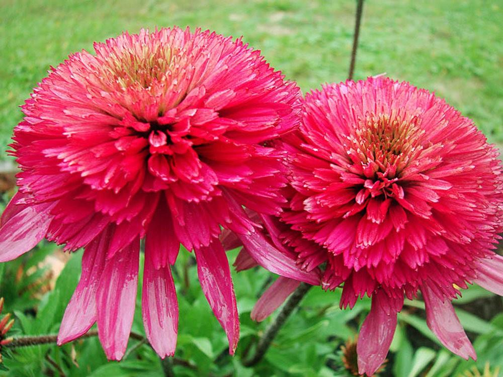花卉日记之----7_图1-13