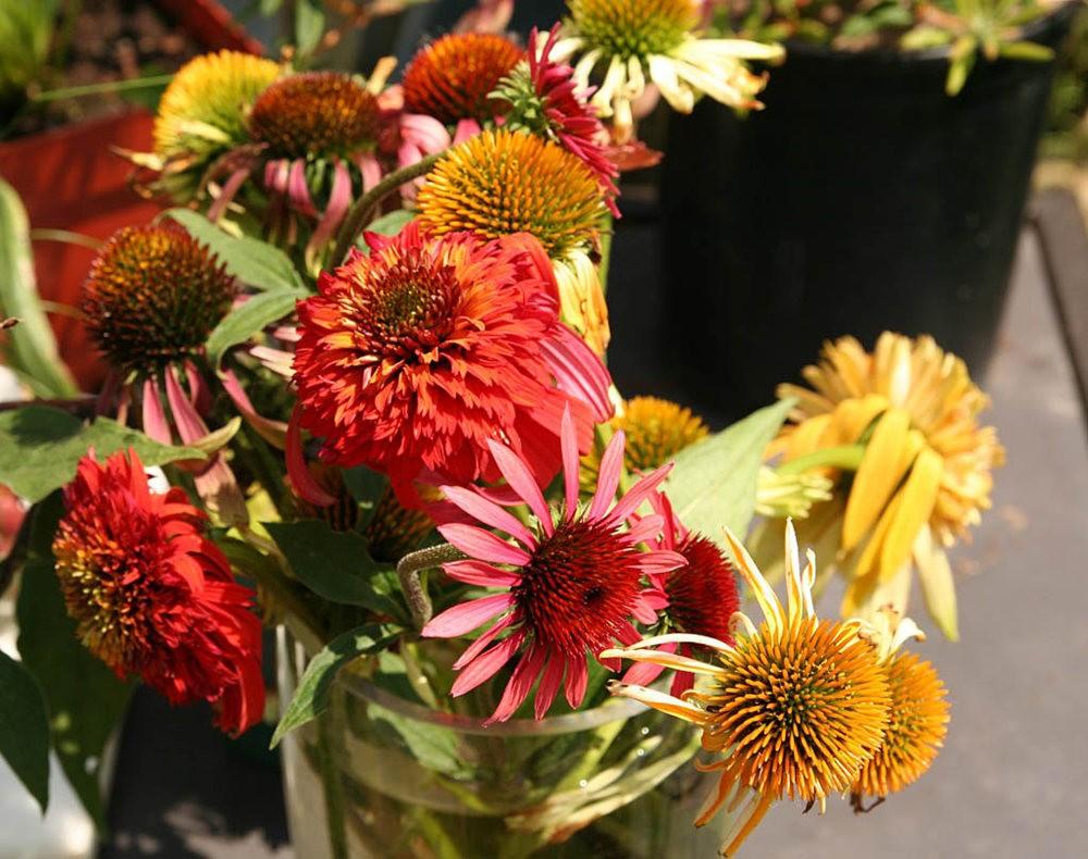 花卉日记之----7_图1-14