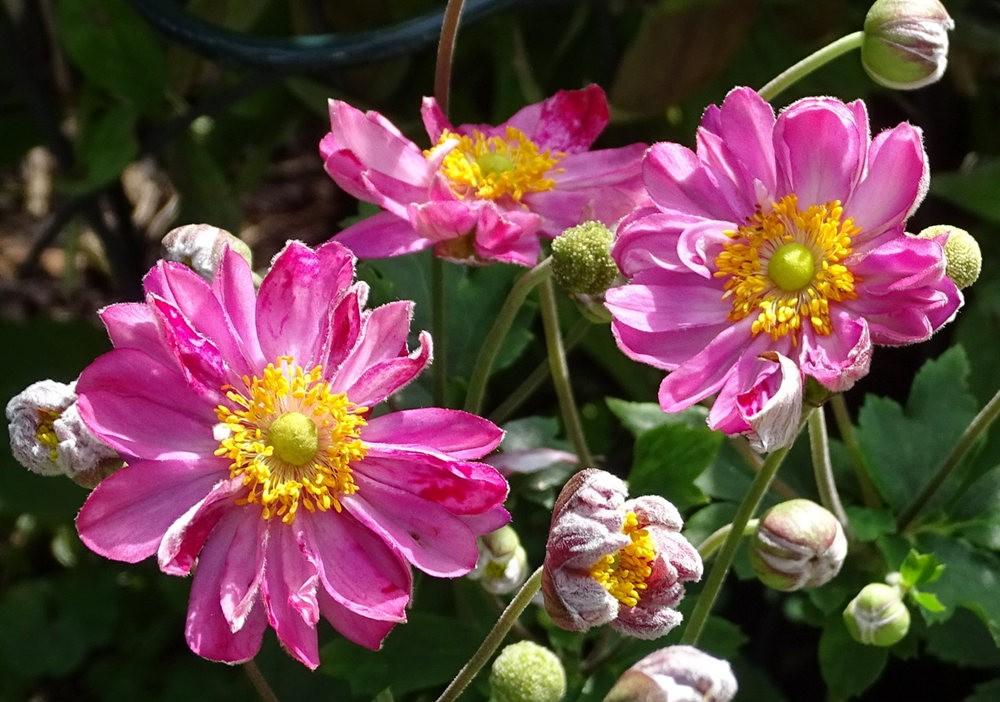 花卉日记之----7_图1-18