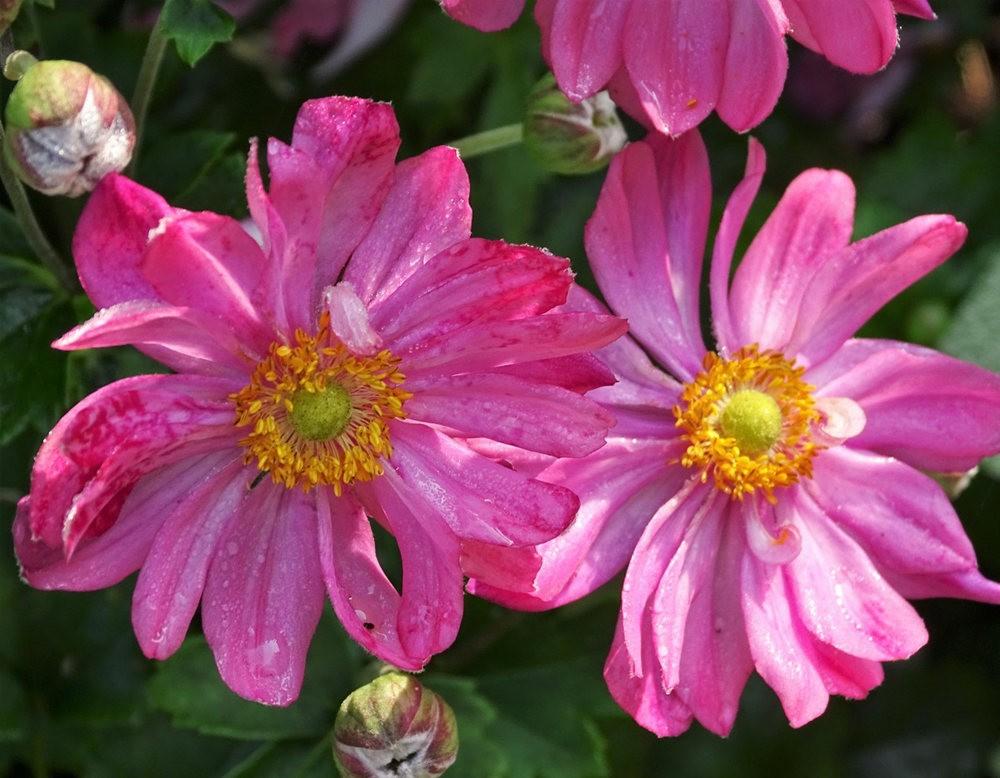 花卉日记之----7_图1-19