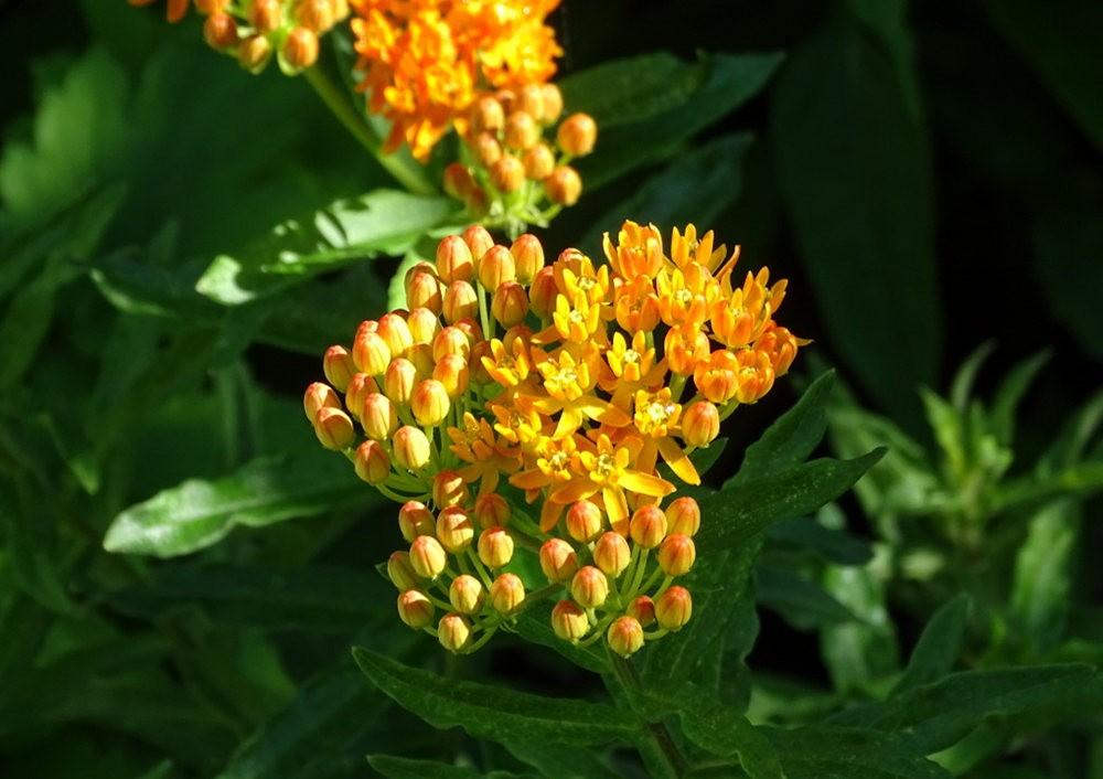 花卉日记之----7_图1-21