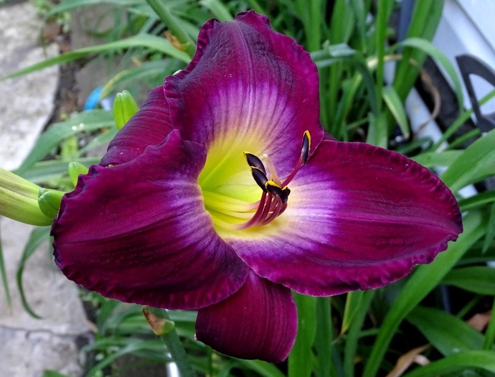 花卉日记之---8_图1-1