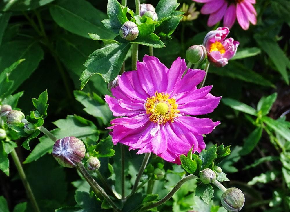 花卉日记之---8_图1-2