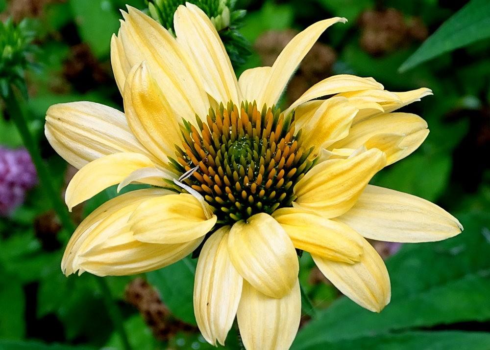 花卉日记之---8_图1-3