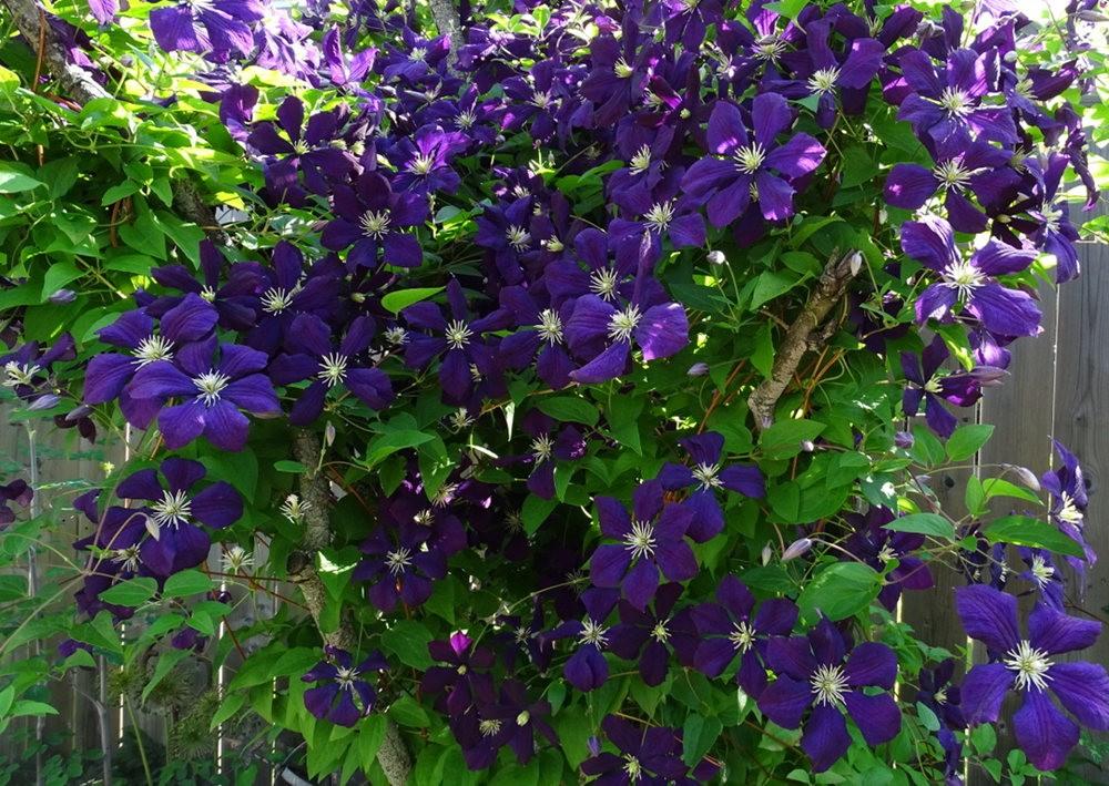 花卉日记之---8_图1-8