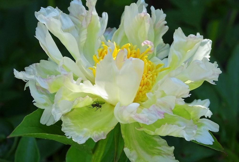 花卉日记之---8_图1-10