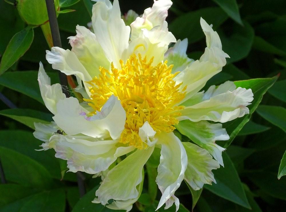 花卉日记之---8_图1-11