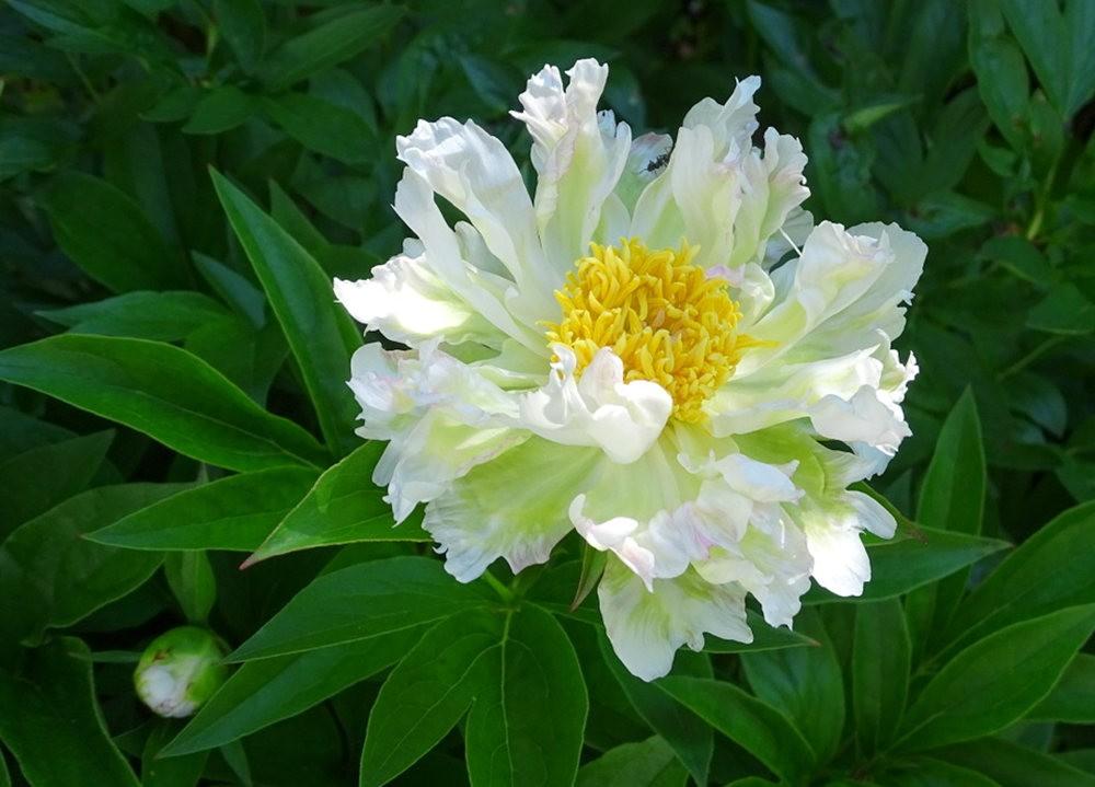 花卉日记之---8_图1-12