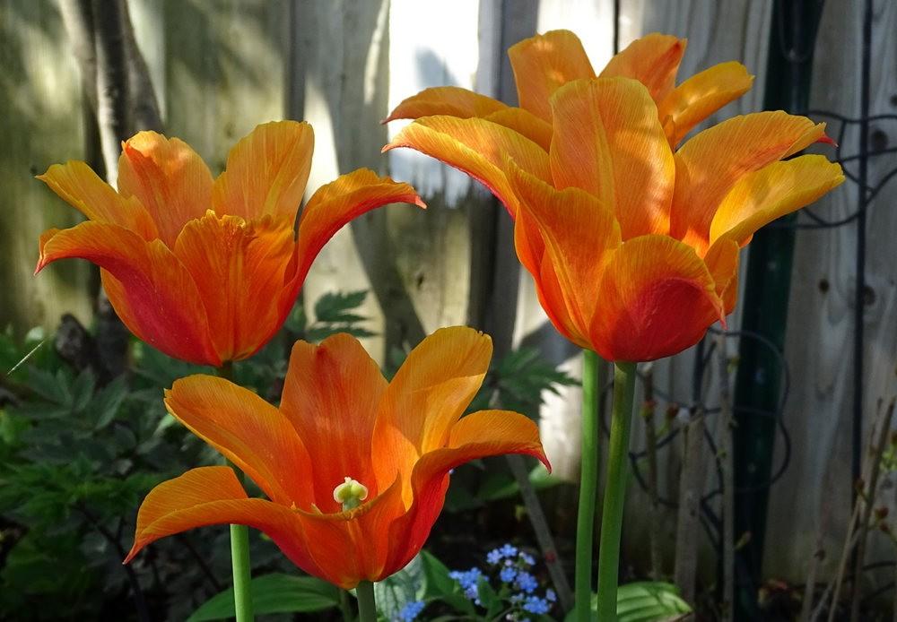 花卉日记之---8_图1-15