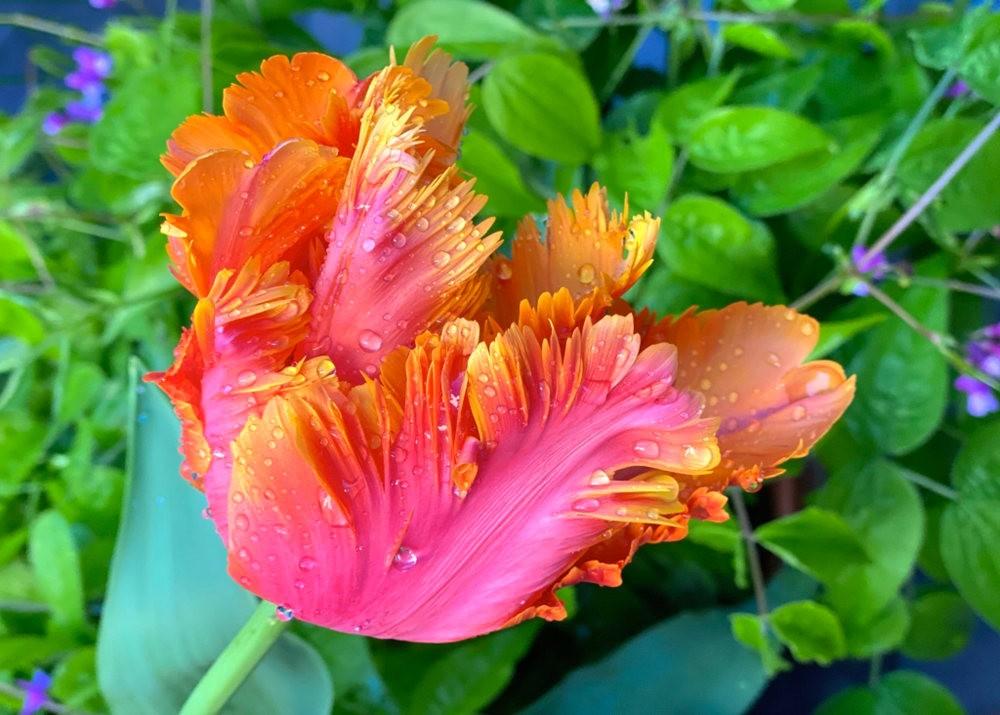 花卉日记之---8_图1-16