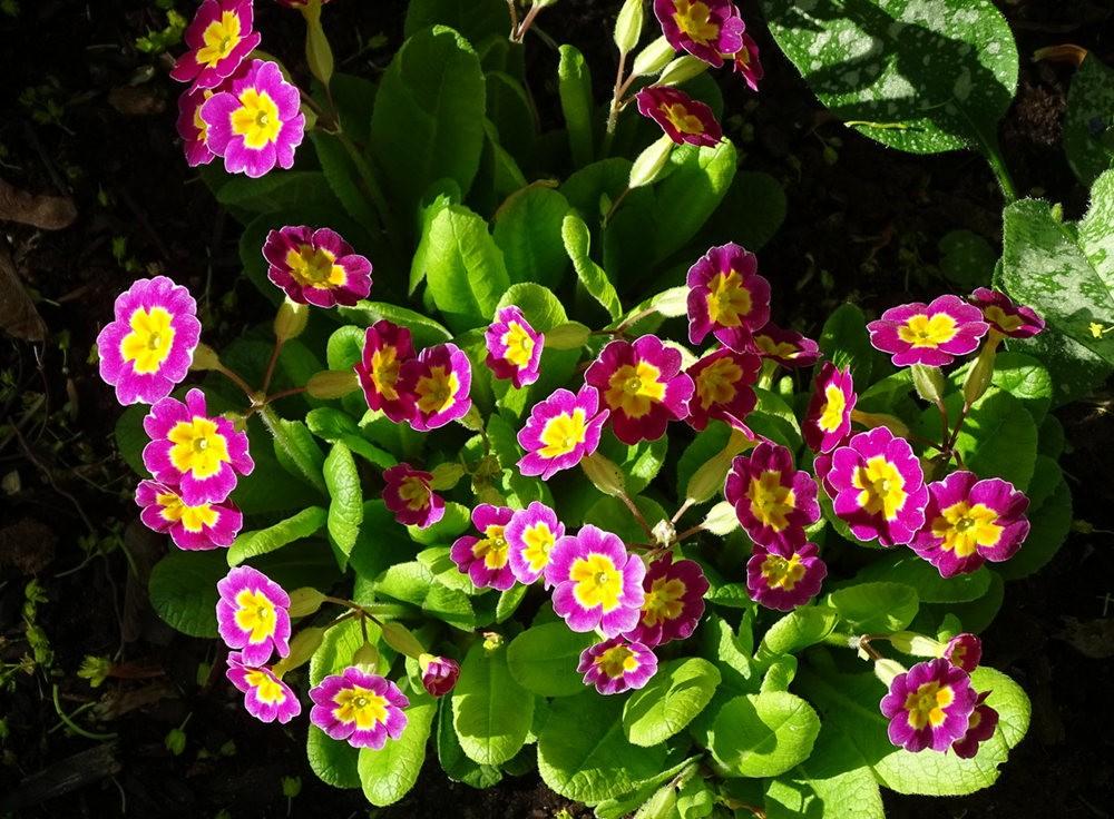 花卉日记之---8_图1-17