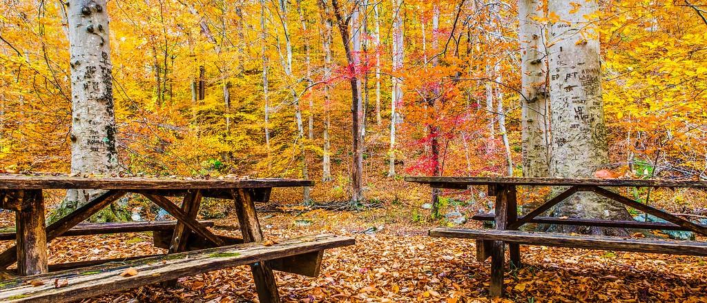 宾州雷德利克里克公园(Ridley creek park),秋意浓浓_图1-19