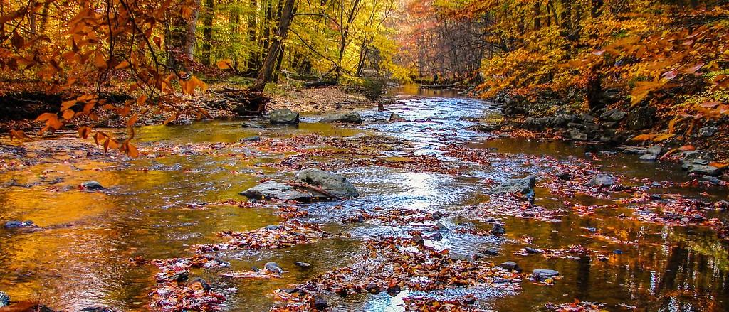 宾州雷德利克里克公园(Ridley creek park),秋意浓浓_图1-15