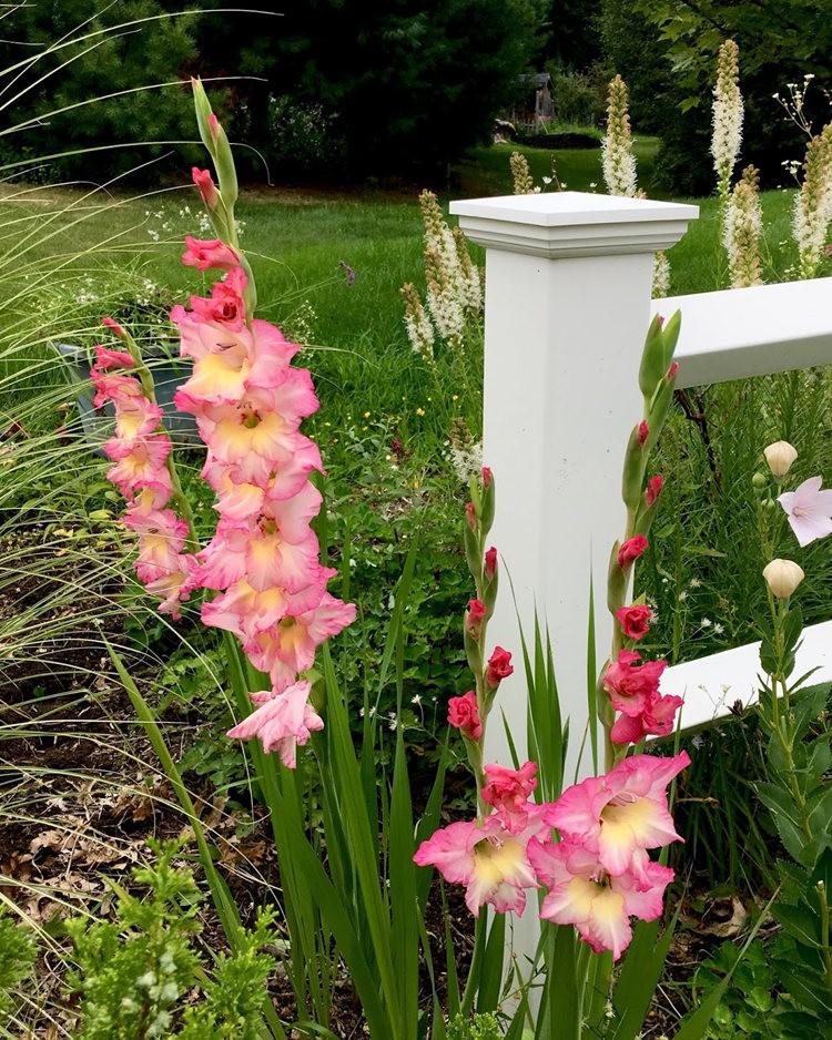 红屋花园在波士顿_图1-9