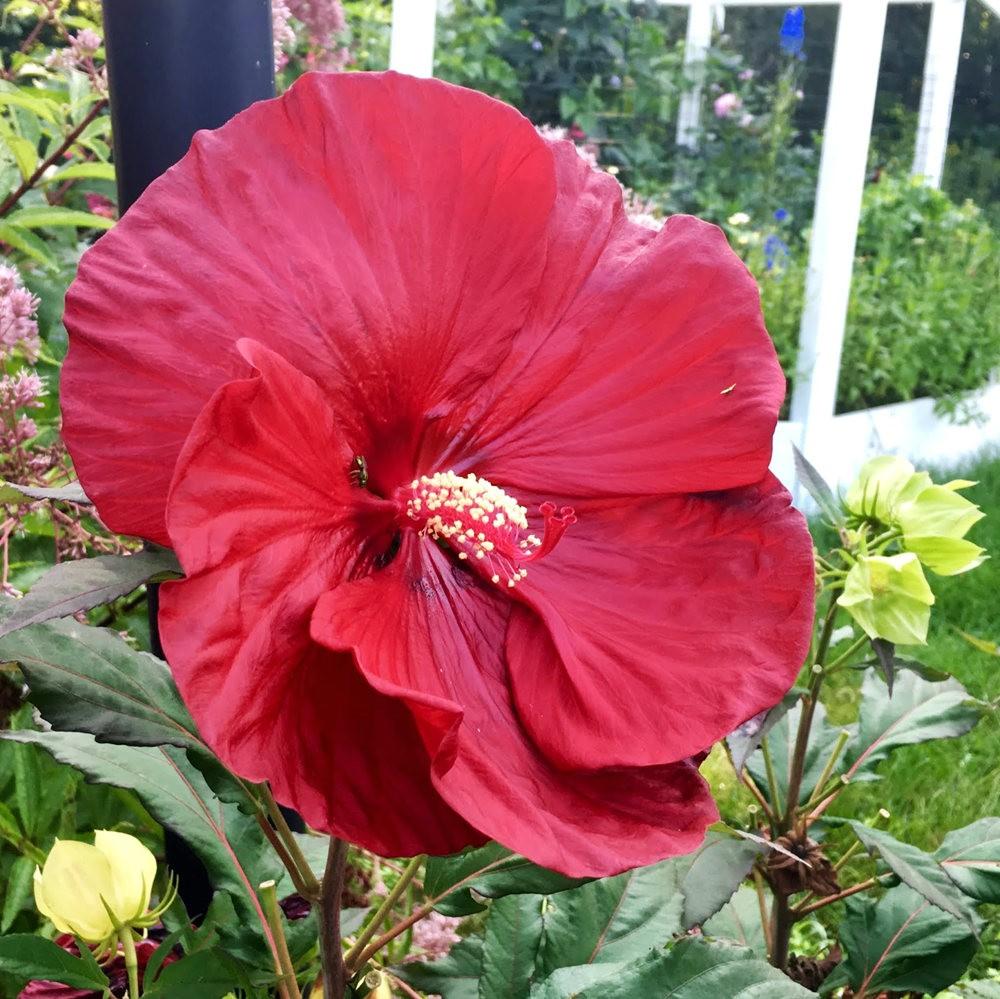 红屋花园在波士顿_图1-10