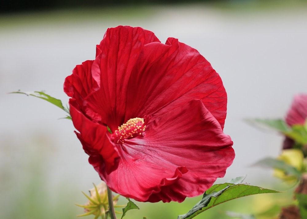 红屋花园在波士顿_图1-11