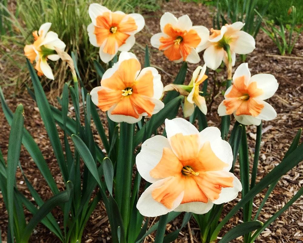 红屋花园在波士顿_图1-23