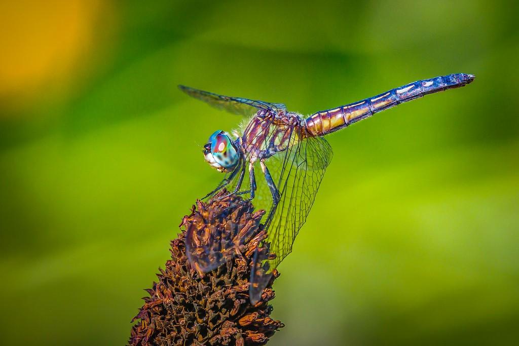 小蜻蜓,近观_图1-6