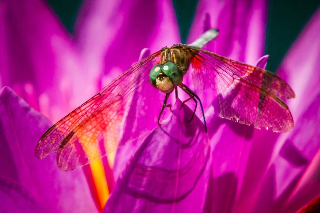 小蜻蜓,近观_图1-5
