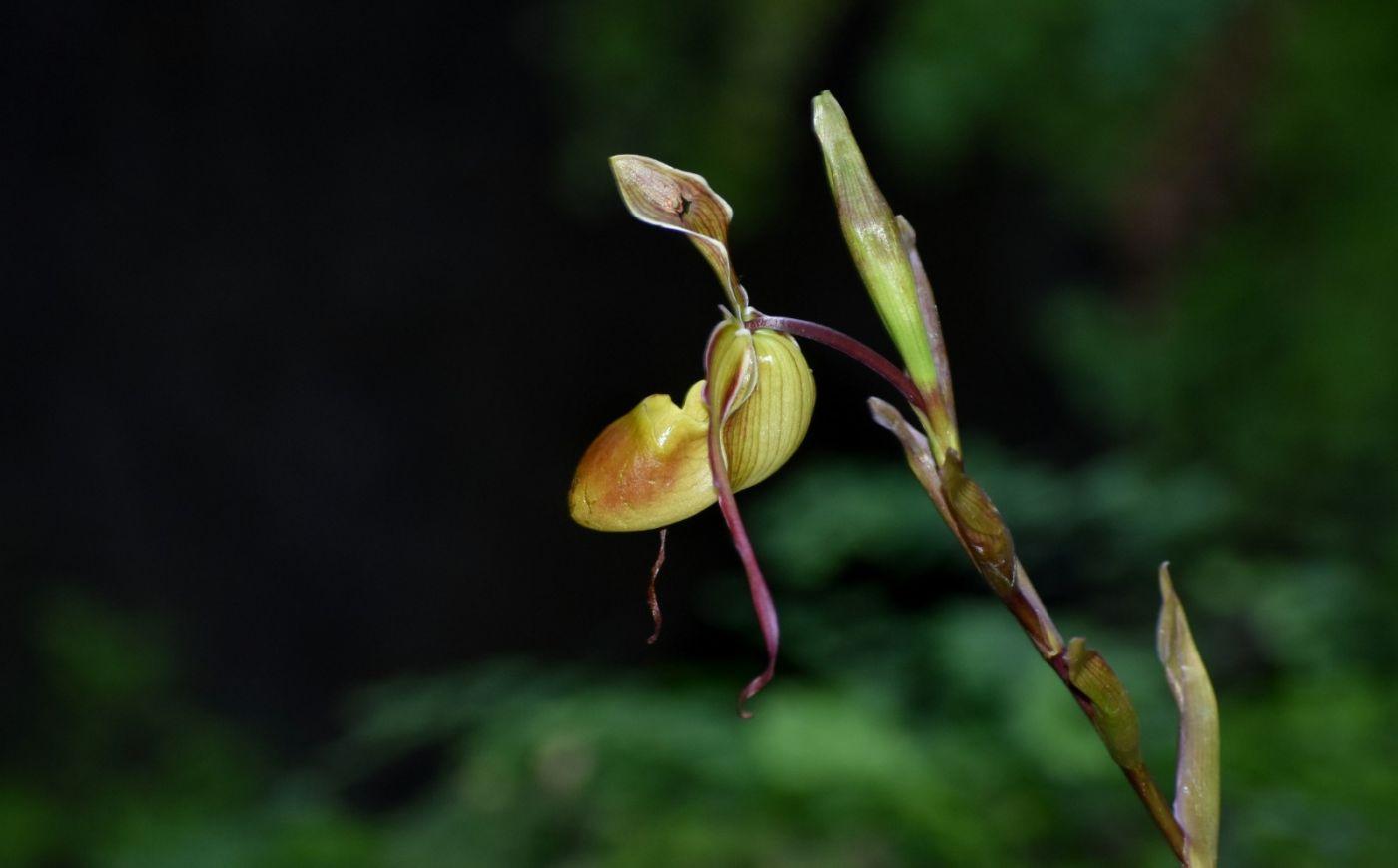 最近在温室拍的花 (1)_图1-3
