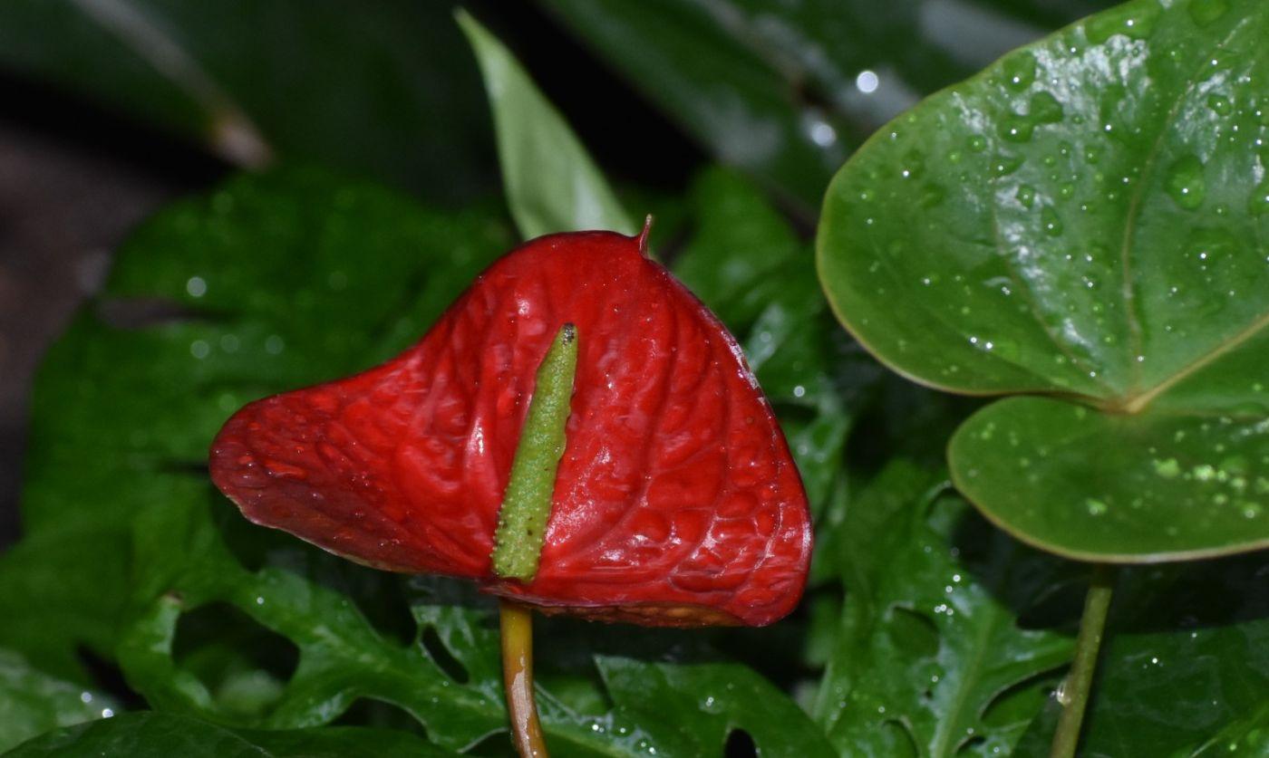最近在温室拍的花 (1)_图1-6