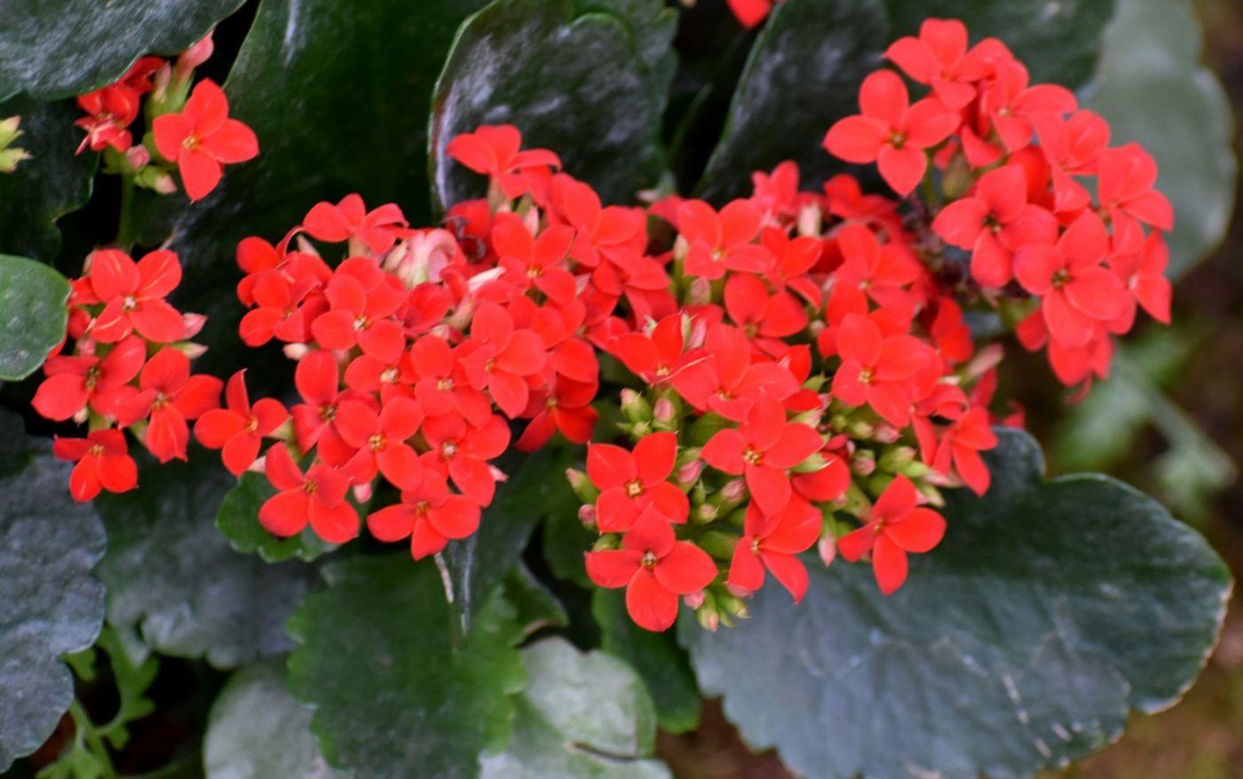最近在温室拍的花 (1)_图1-8