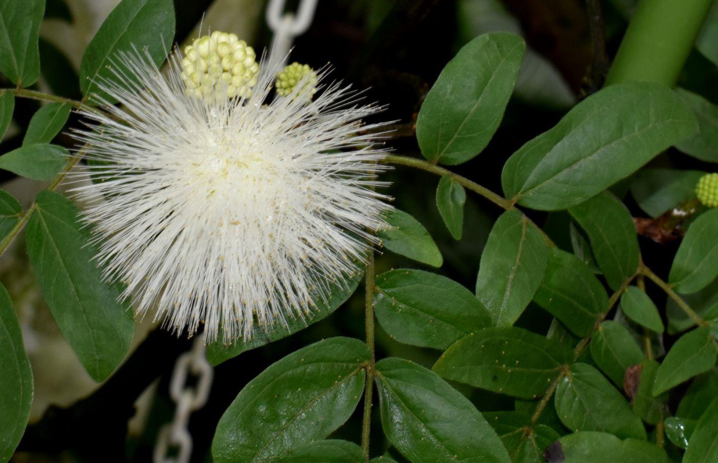最近在温室拍的花 (1)_图1-23