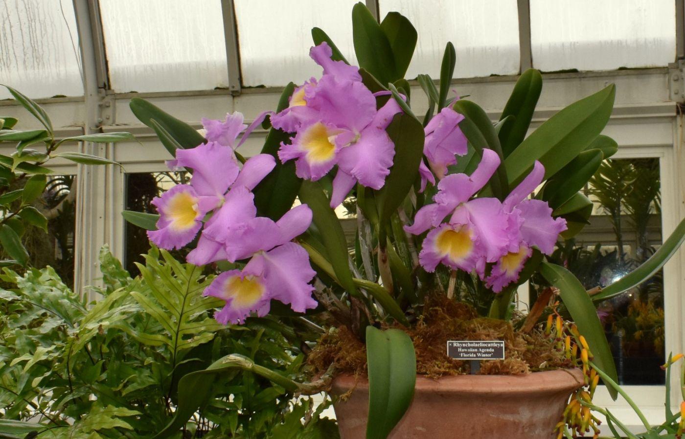 最近在温室拍的花 (2)_图1-2