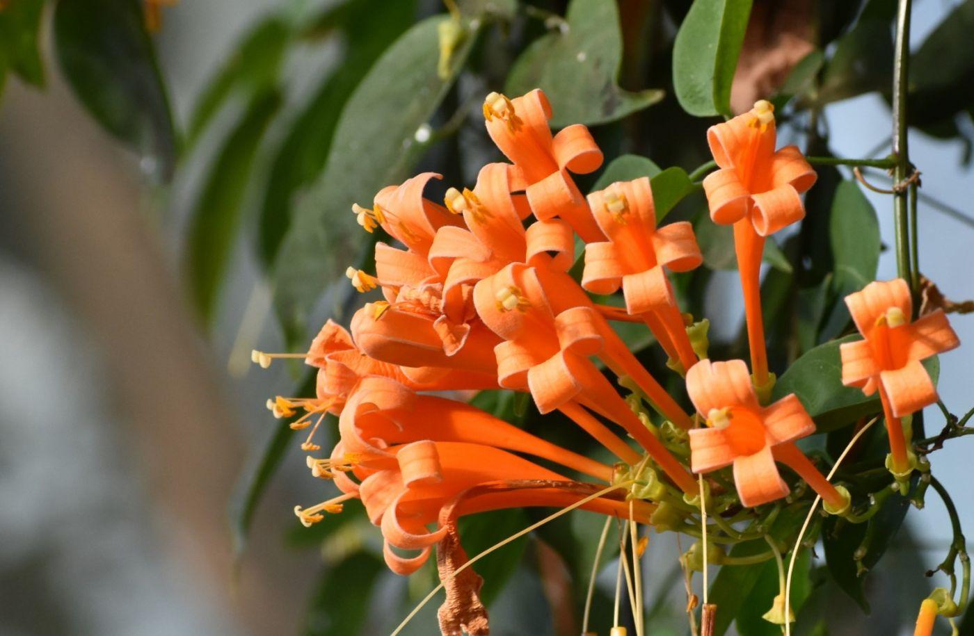最近在温室拍的花 (2)_图1-5