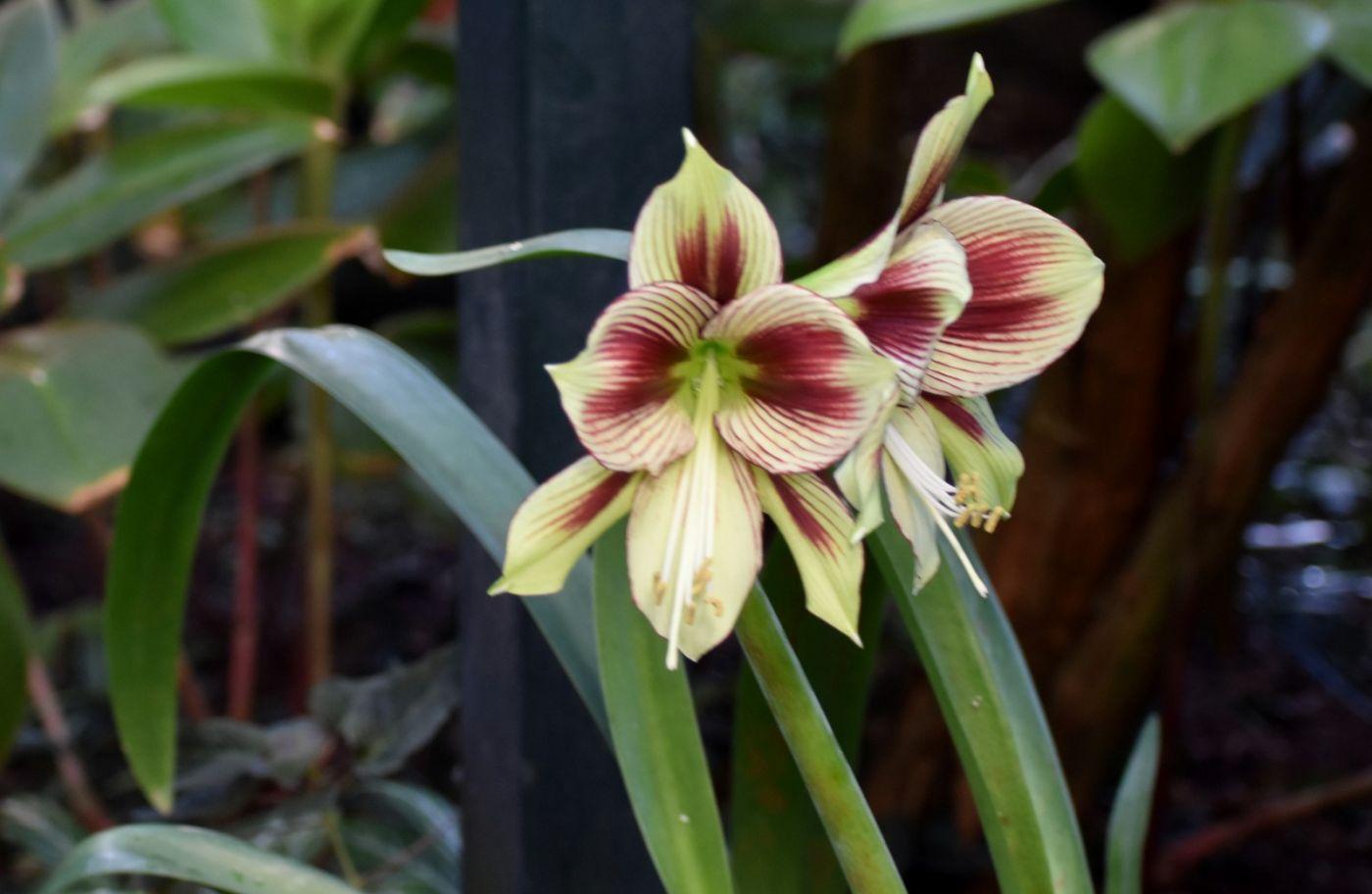 最近在温室拍的花 (2)_图1-7