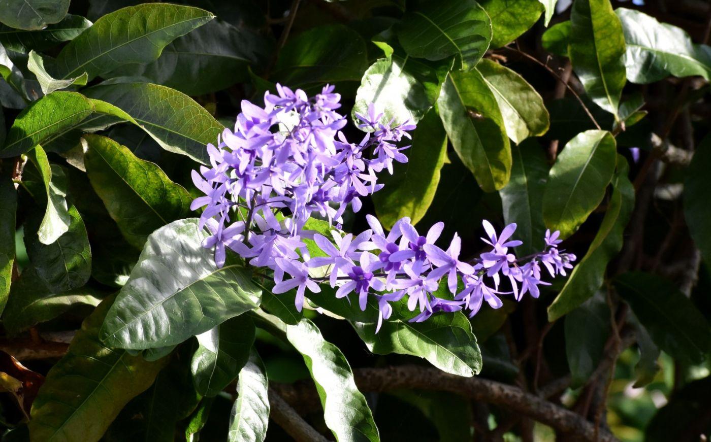 最近在温室拍的花 (2)_图1-10
