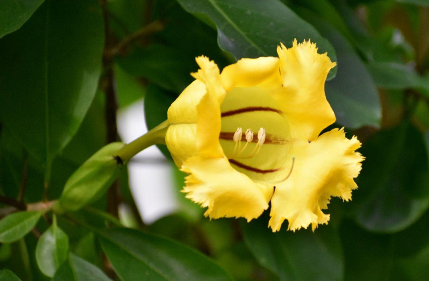 最近在温室拍的花 (2)_图1-22