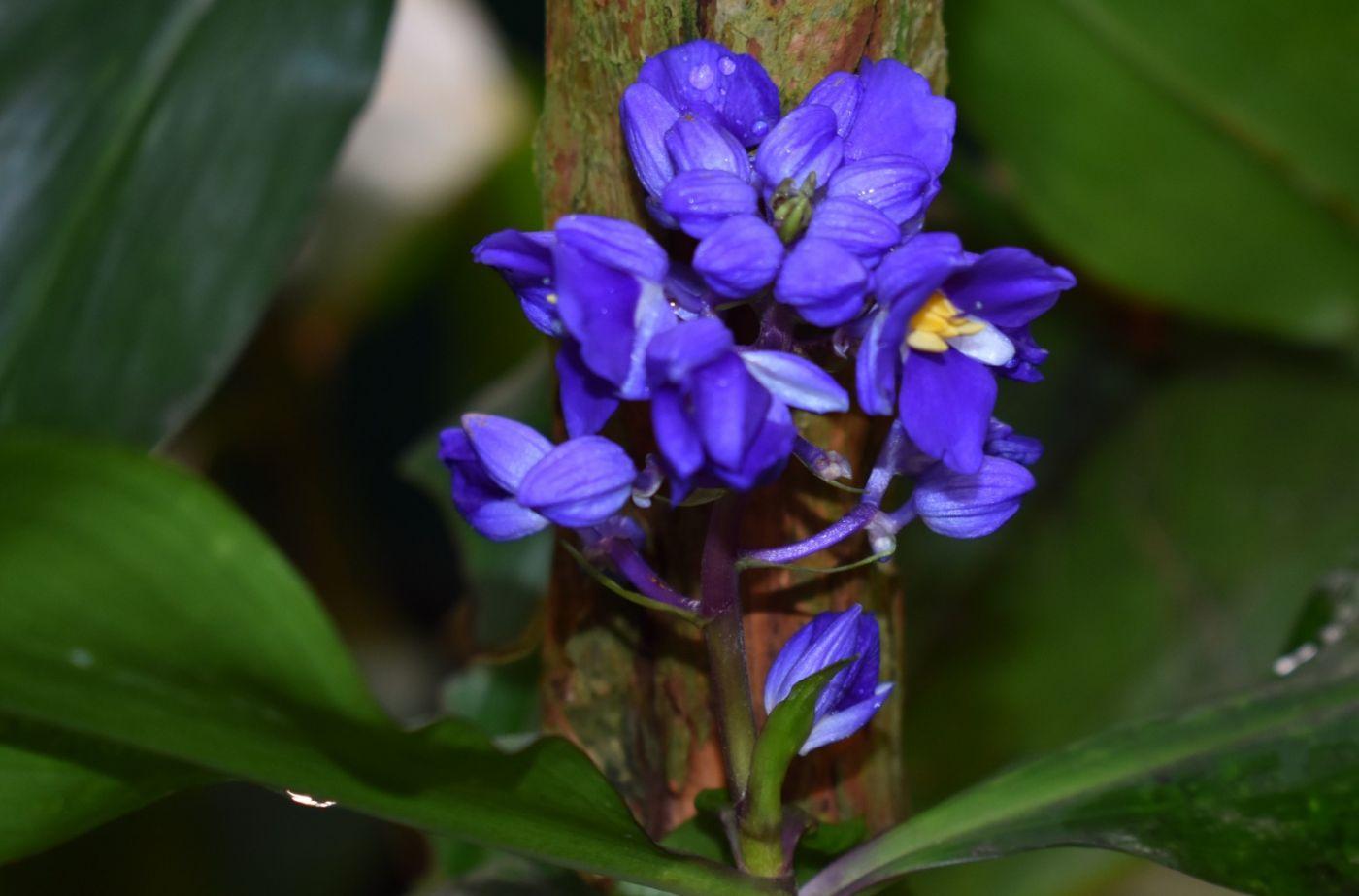 最近在温室拍的花 (2)_图1-26
