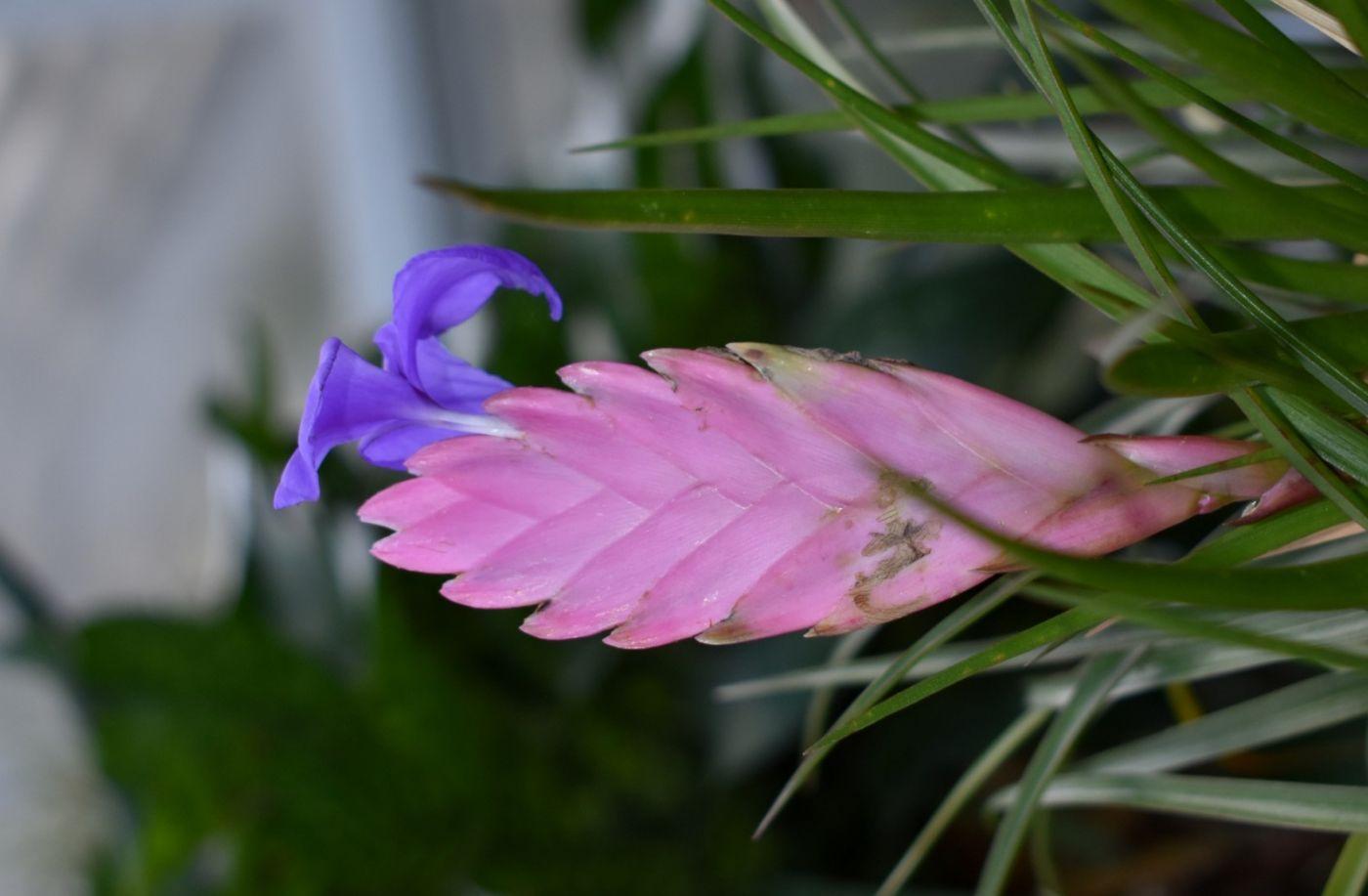 最近在温室拍的花 (2)_图1-27