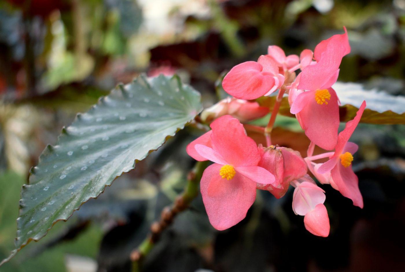 最近在温室拍的花 (2)_图1-28
