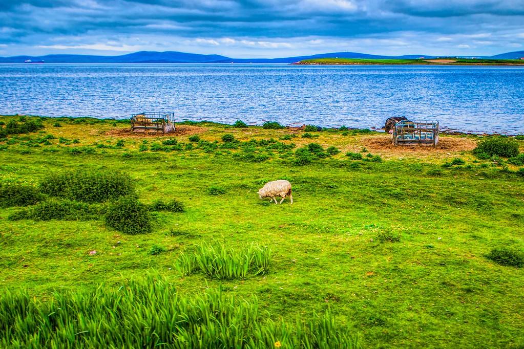 苏格兰奥克尼岛(Orkney Islands),沿路风景_图1-10