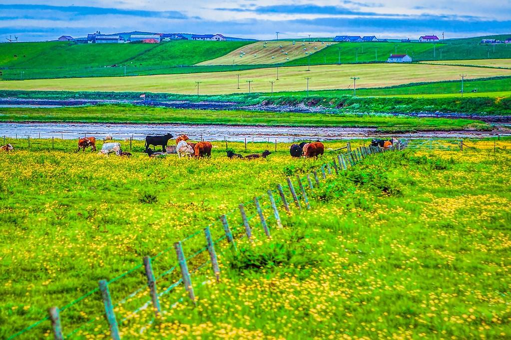 苏格兰奥克尼岛(Orkney Islands),沿路风景_图1-14